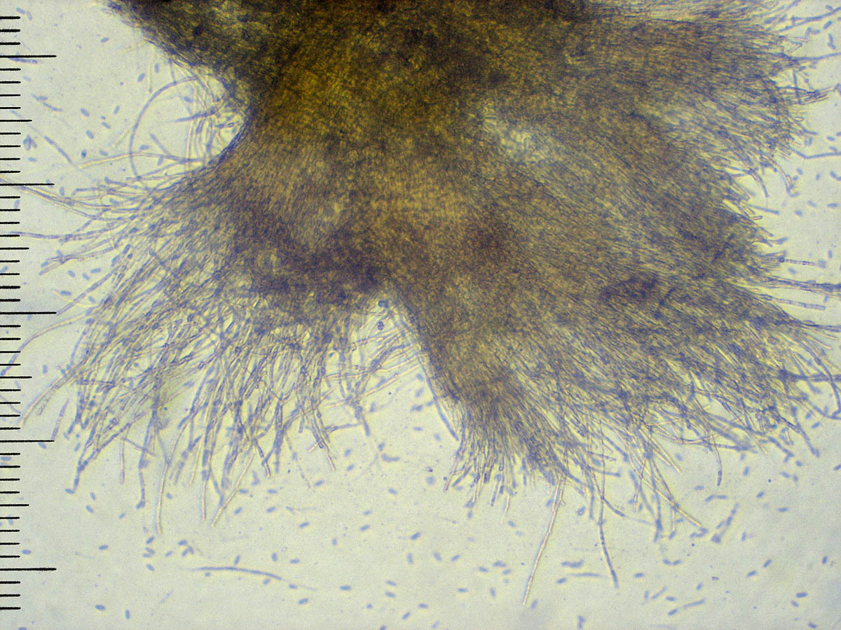 спорокарп х100, аммиачный раствор Автор фото: Андрей Смирнов