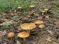 Дружественные грибные сайты